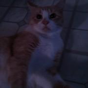 kitty 20