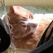 kitty 31