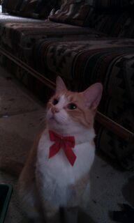 kitty 32